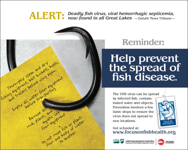 Focus On Fish Health poster