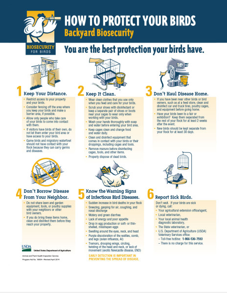 Biosecurity for Birds poster/guide