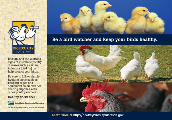 Biosecurity for Birds half page ad